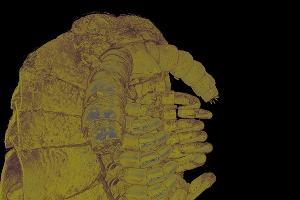 Многоножка Hirudicryptus abchasicus ©Снимок информационной службы ДГТУ