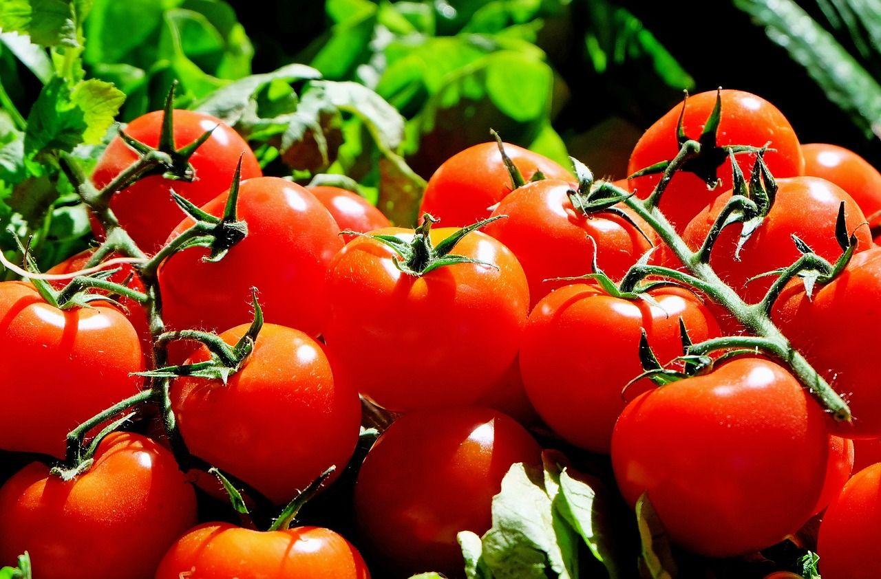 Вдонском регионе уничтожено неменее 2 тонн фруктов иовощей, зараженных вредителями