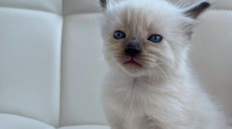 ©Фото из инстаграма cat_kessi_, https://www.instagram.com/cat_kessi_/