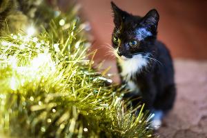 Это кот Болек. Раньше у него был друг Лёлек. Но с недавних пор Болек остался один :( ©Елена Синеок, Юга.ру