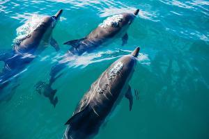 Дельфины ©фото с сайта pixabay.com