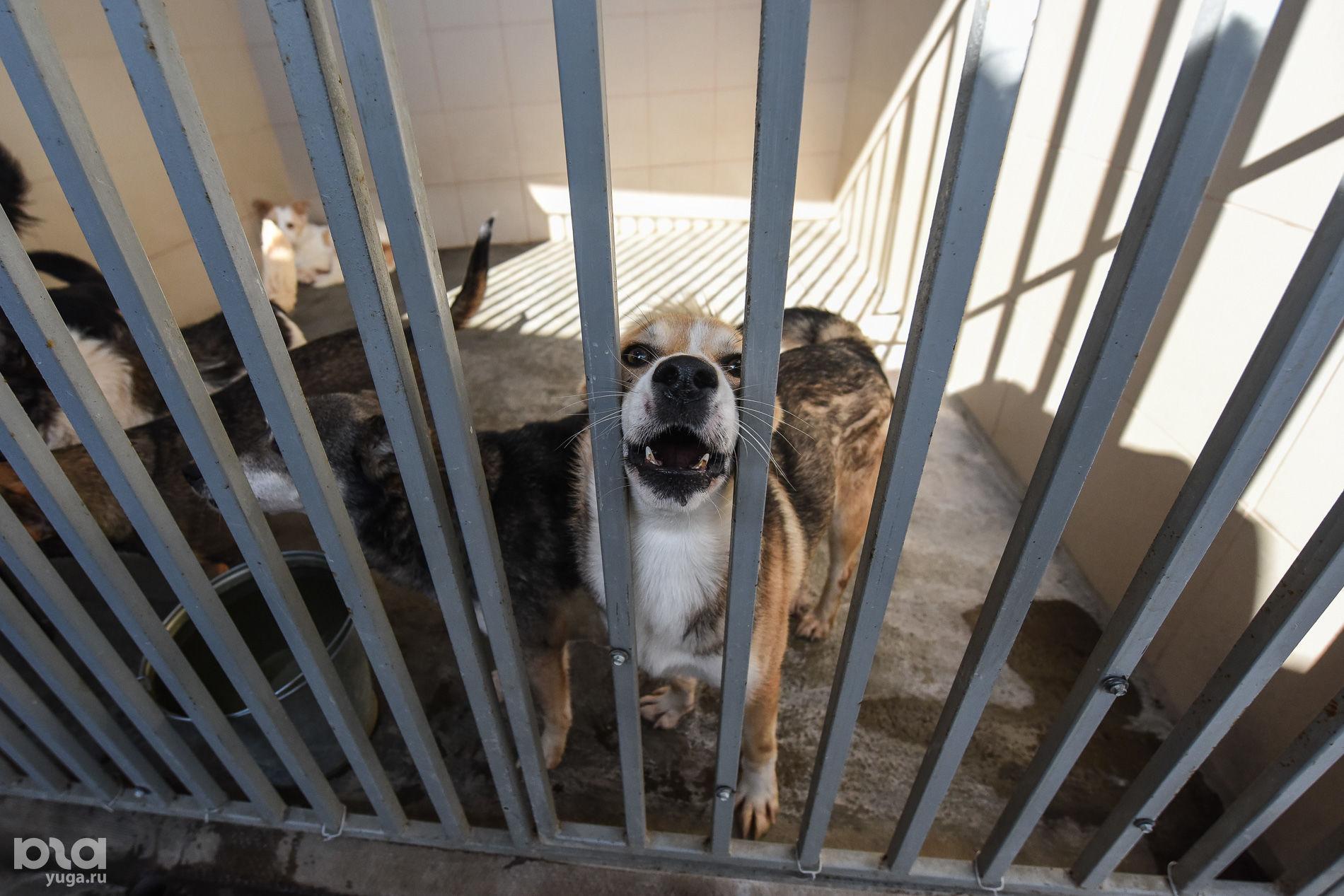 Приют для пострадавших животных «Краснодог» ©Фото Елены Синеок, Юга.ру