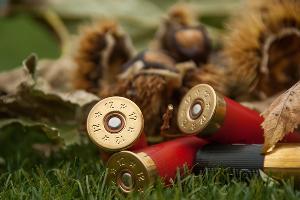 Охота ©Фото с сайта pixabay.com