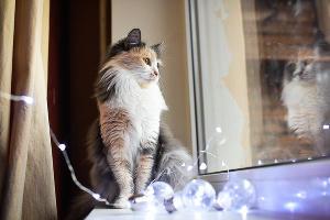 Кошка Маша, 3 года ©Фото Елены Синеок, Юга.ру