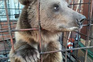 ©Фото из инстаграма очевидицы, заметившей медведя, instagram.com/uka_akvarelka/