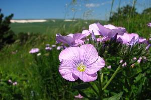 ©Фото с сайта Кавказского государственного природного биосферного заповедника, kgpbz.ru