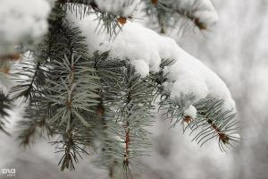 Снег в Краснодаре ©Алёна Живцова, ЮГА.ру