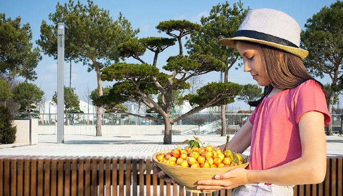 Фрукты и ягоды прямо подногами