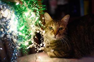 Кошка Анфиса, 13,5 лет ©Елена Синеок, Юга.ру