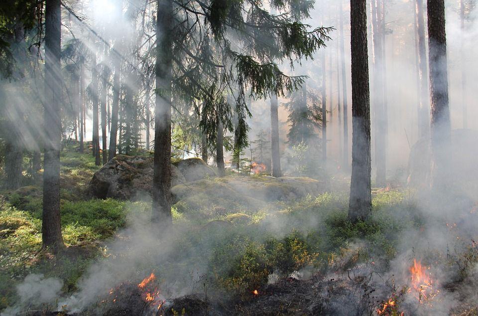 С1апреля наКубани объявлен пожароопасный сезон