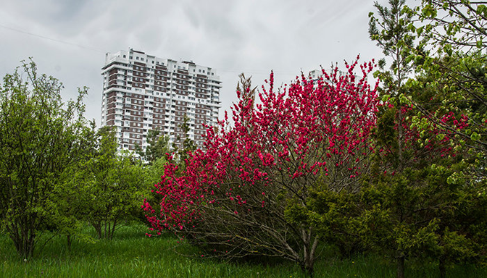 Что в мае цветет на Кубани?