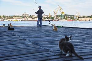 Котики в Севастополе ©Фото Юга.ру