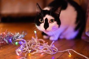Трехлетний кот Шурик ©Елена Синеок, Юга.ру