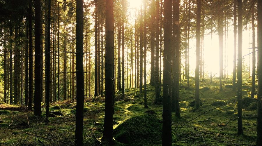 ©Фото с сайта unsplash.com