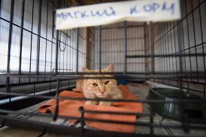 """Приют для пострадавших животных """"Краснодог"""" ©Фото Елены Синеок, ЮГА.ру"""