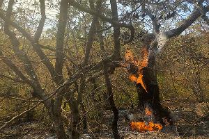 Пожар в заповеднике «Утриш» ©Фото Марии Сотсковой
