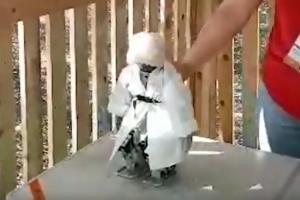 Робот Хажби танцует лезгинку ©Скриншот видео из канала The Caucasus Post, www.youtube.com/channel/UCE4hvWSl3CkWMAy3WZEqrGA