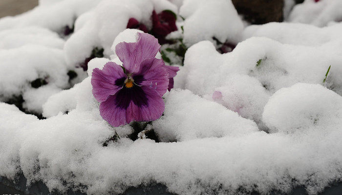 Снег в Краснодаре ©Фото Алёны Живцовой, Юга.ру
