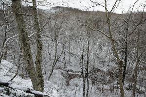 Лес у пещер ©Фото Елены Синеок, Юга.ру