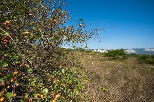 Суджукская лагуна и ее окрестности ©Фото Елены Синеок, Юга.ру