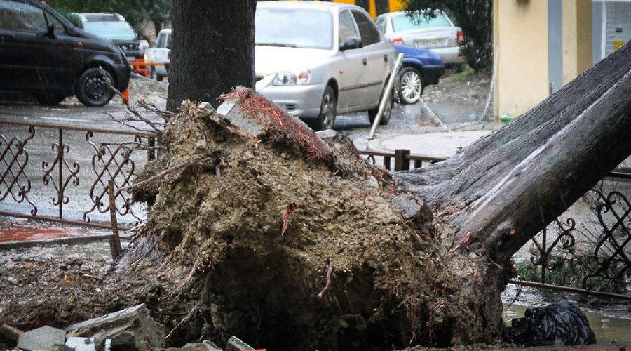 Последствия урагана и снегопада в Сочи ©Фото Юга.ру