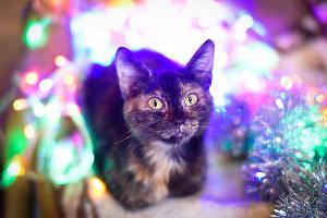 Кошка Кнопка ©Елена Синеок, Юга.ру