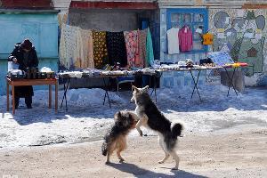 По дороге в Архыз ©Елена Синеок. ЮГА.ру