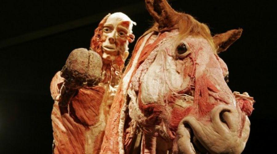 """Выставка """"Тайны тела. Вселенная внутри"""" ©http://afisha.bigmir.net/"""