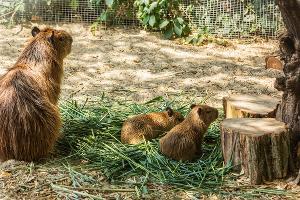 ©Фото с сайта zoopark-rostov.ru