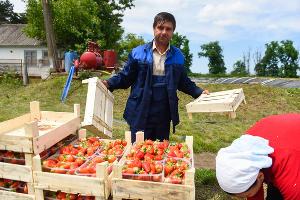 Овощное подразделение начали восстанавливать два года назад. Сейчас производится пять основных культур — томаты, лук, клубника, арбузы, баклажаны. ©Фото Елены Синеок, Юга.ру