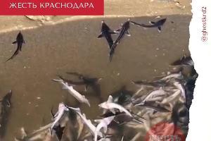 ©Скриншот видео из телеграм-канала «Жесть Краснодара и края», t.me/ghestkrd