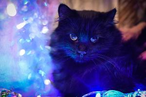 Ласковая кошка Луша, ей 2 года. На самом деле она очень смущалась внимания во время съемки ©Елена Синеок, Юга.ру