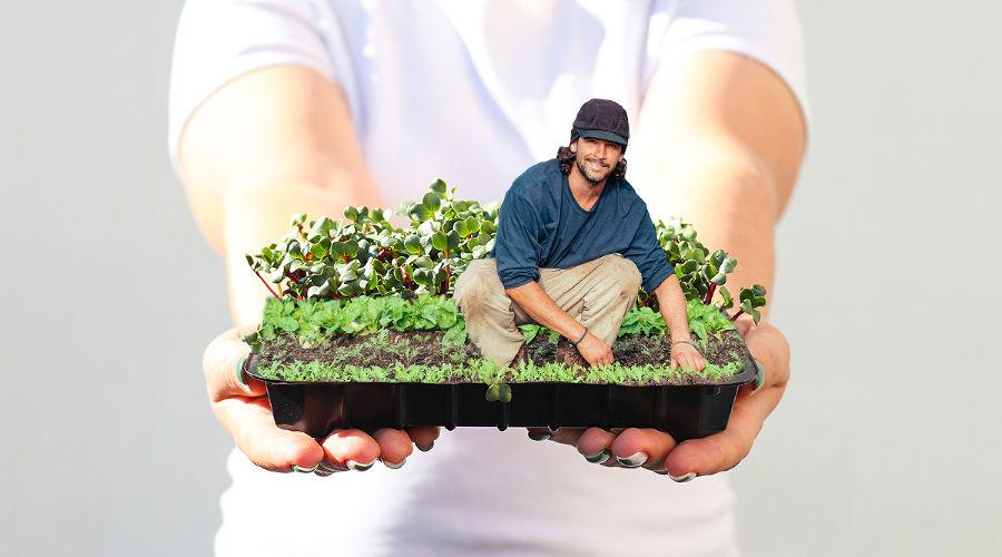 Урожай наподоконнике