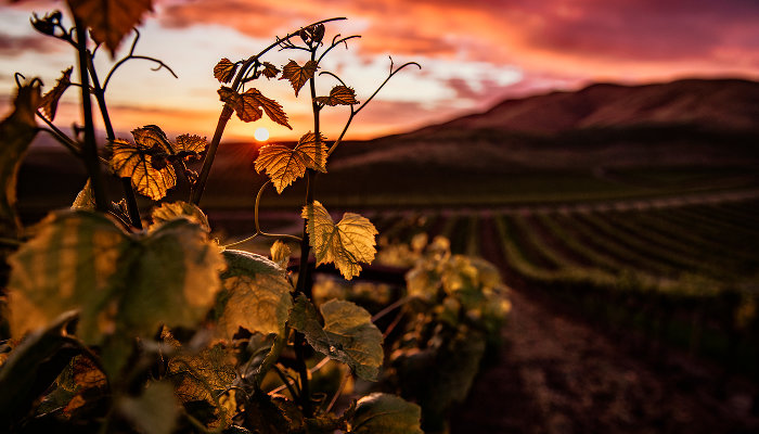 ©Фото Wirestock, freepik.com