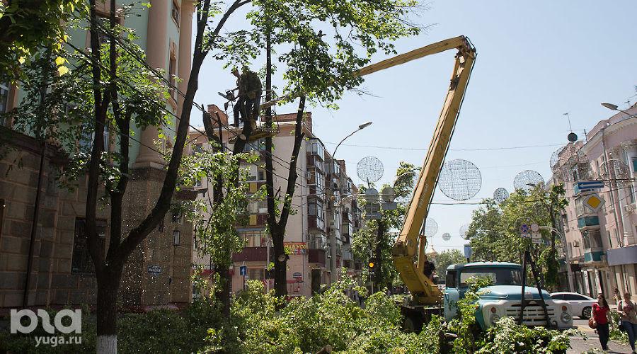 Спил деревьев на ул. Красной в Краснодаре ©Михаил Ступин, ЮГА.ру