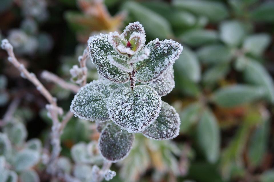 ВБашкирии ожидаются заморозки до-6°С