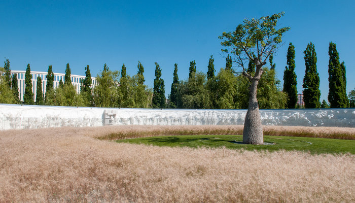 Бутылочное дерево на фоне скульптурной композиции «Искусственная среда» в парке «Краснодар» ©Фото Дмитрия Пославского, Юга.ру