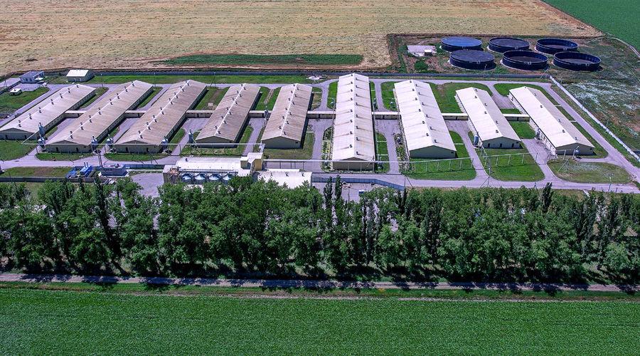 Свинотоварный комплекс