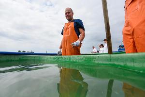 Молодь осетровых рыб выпустили в реку Кубань ©Фото Елены Синеок, Юга.ру