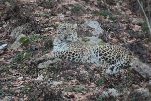©Фото пресс-службы Сочинского национального парка