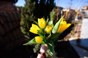 Тюльпаны ©Фото Елены Синеок, Юга.ру