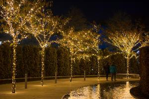 Парк «Краснодар»  с новогодней подсветкой ©Фото Елены Синеок, Юга.ру