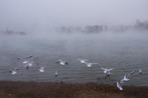 Туман в парке «Солнечный остров» ©Фото Елены Синеок, Юга.ру