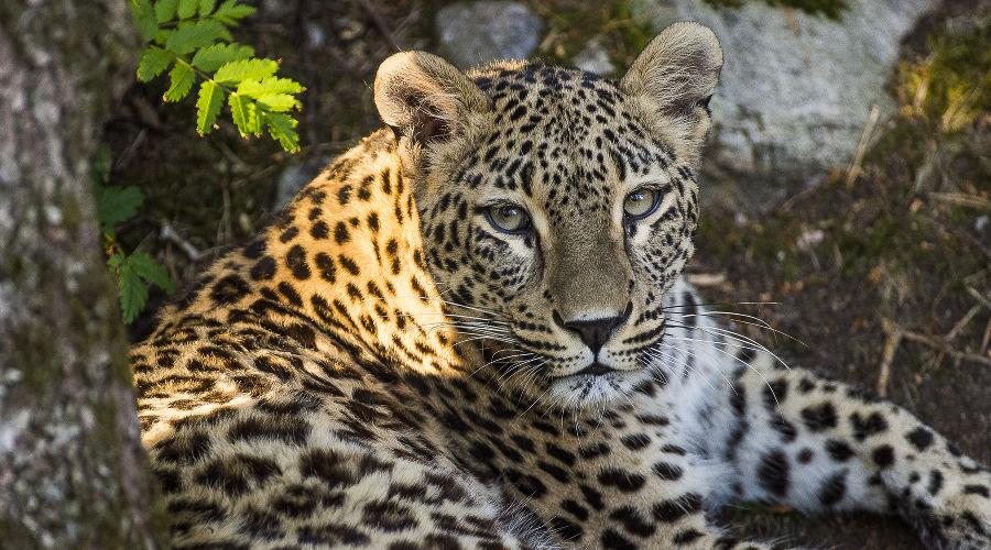 ©Фото пресс-службы отделения «Российский Кавказ» Всемирного фонда дикой природы