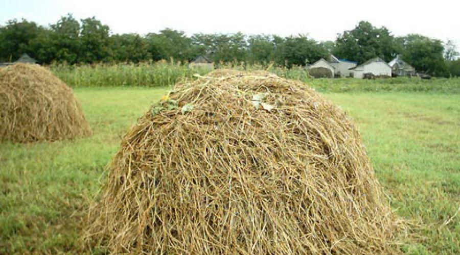 Марихуана сено культивирование конопли особо крупный размер