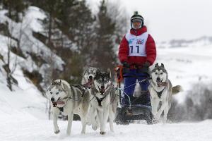 Первая гонка на собачьих упряжках «Лагонаки-2017». Адыгея, 6 февраля ©Фото Юга.ру