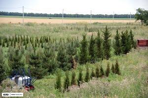 """Игорная зона """"Азов-сити"""", питомник растений ©Фото Юга.ру"""