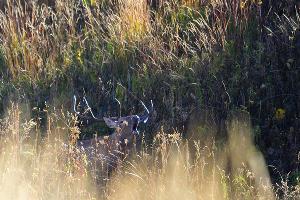 ©Фото Сергея Трепета, предоставлено пресс-службой ФГБУ «Кавказский биосферный заповедник»