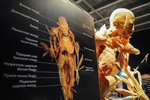 """Анатомическая выставка """"Части тела"""" в Краснодаре ©Елена Синеок, ЮГА.ру"""