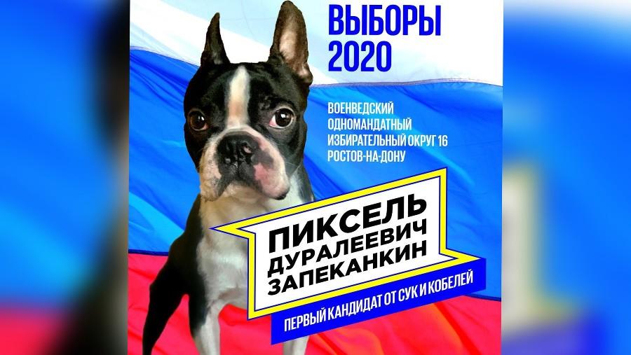 Пиксель Запеканкин ©Фото со страницы instagram.com/pixeldog.ru